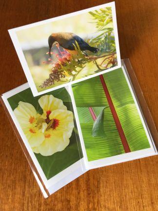 cards Rachel Saunders